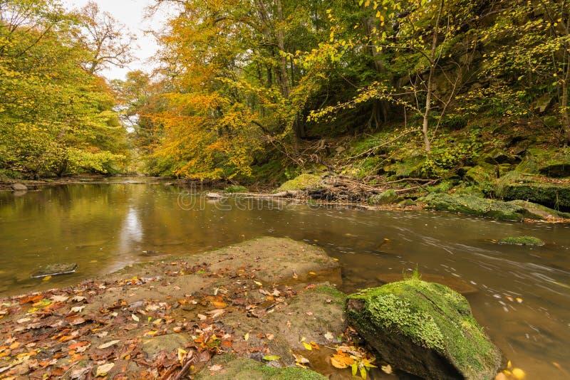 Legno di Plessey e fiume Blyth immagini stock