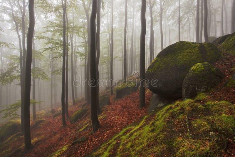 Legno di sguardo spettrale di bella fiaba nebbiosa della foresta in un giorno nebbioso Mattina nebbiosa fredda nella foresta di o fotografie stock libere da diritti