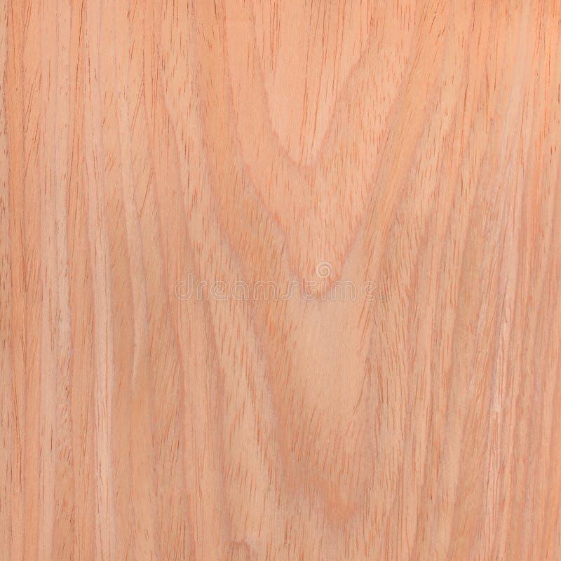 Legno di struttura della quercia, fondo naturale dell'albero fotografia stock libera da diritti