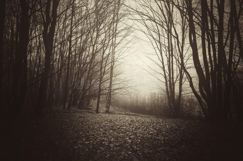 Legno frequentato buio in autunno tardo fotografia stock libera da diritti