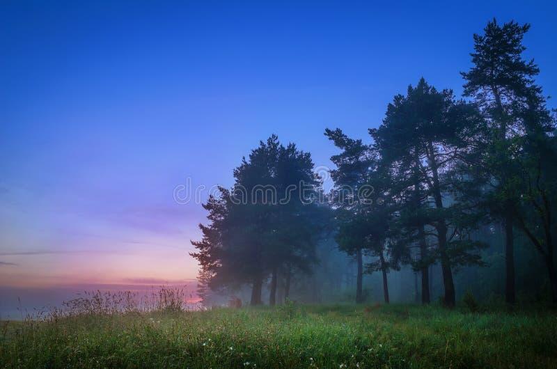Legno nebbioso e prato verde fotografia stock libera da diritti