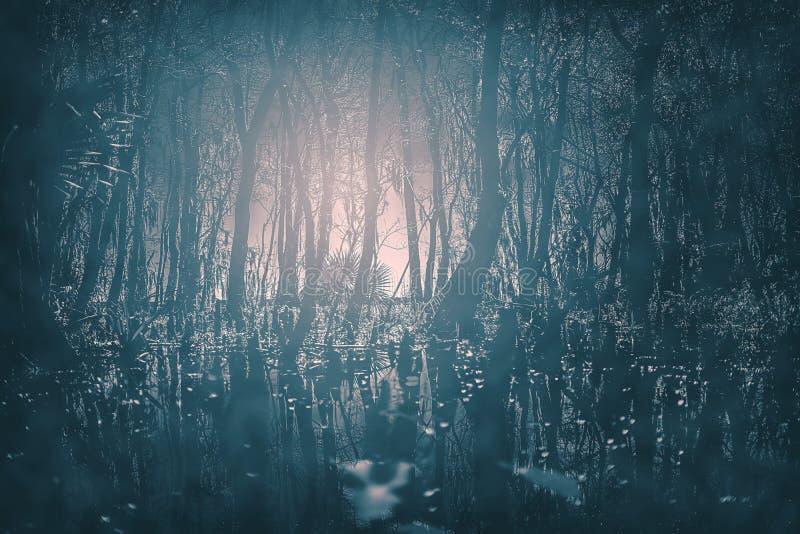 Legno nebbioso illuminato dalla luna gotico terrificante alla notte Grande per i progetti gotici, terrificanti e spaventosi di or immagine stock