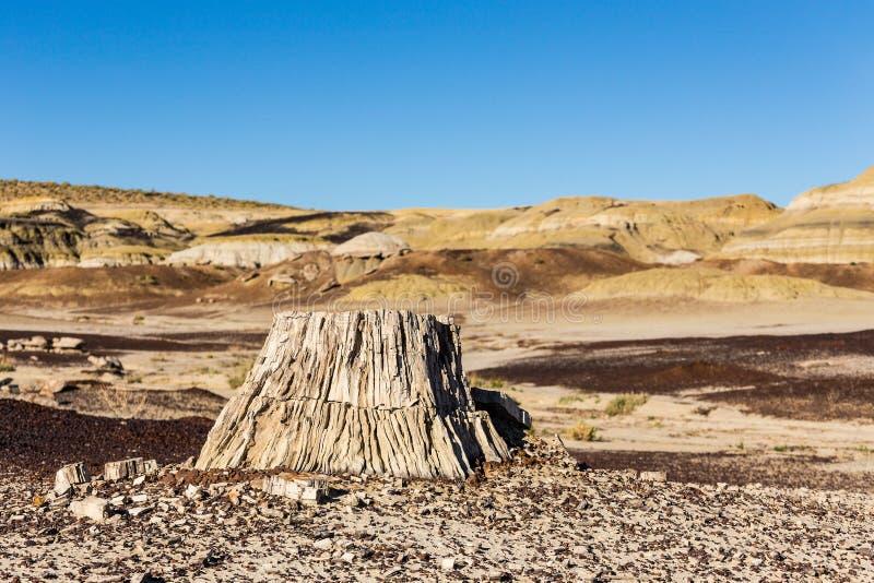 Legno petrificato, ceppo di albero nel deserto, mutamento climatico, riscaldamento globale immagini stock libere da diritti