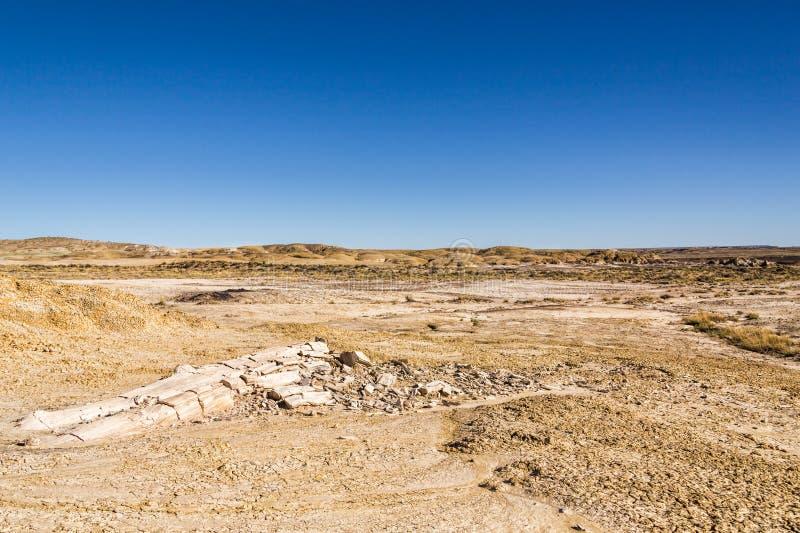 Legno petrificato, connessione dell'albero il deserto, mutamento climatico, riscaldamento globale immagine stock libera da diritti