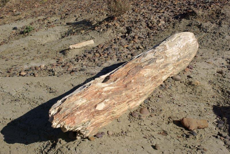 Legno petrificato nella Patagonia fotografia stock