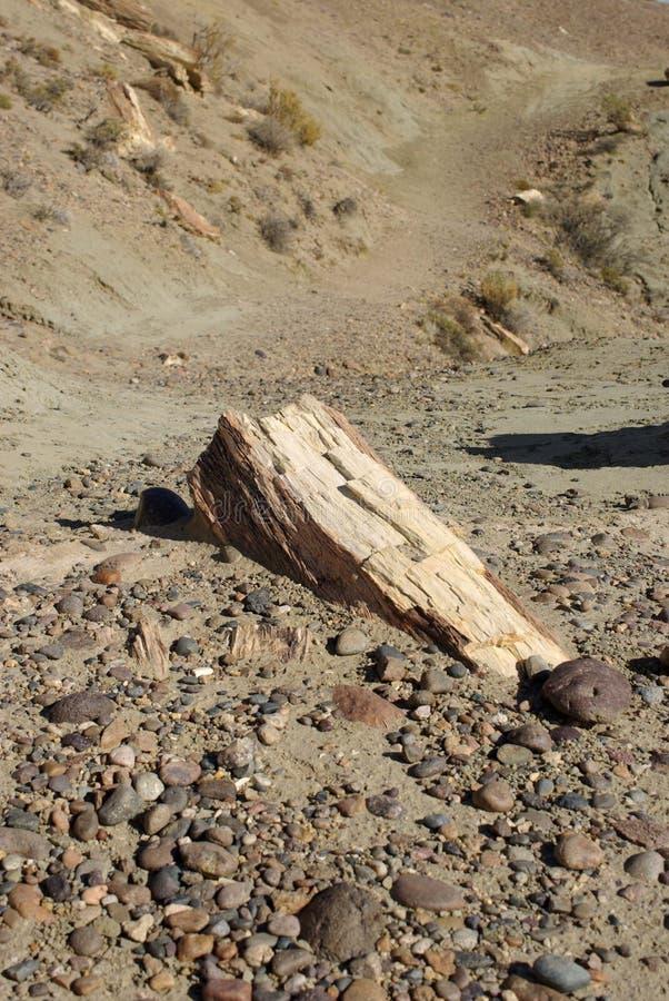 Legno petrificato nella Patagonia fotografia stock libera da diritti