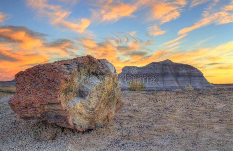 Legno petrificato tramonto fotografia stock