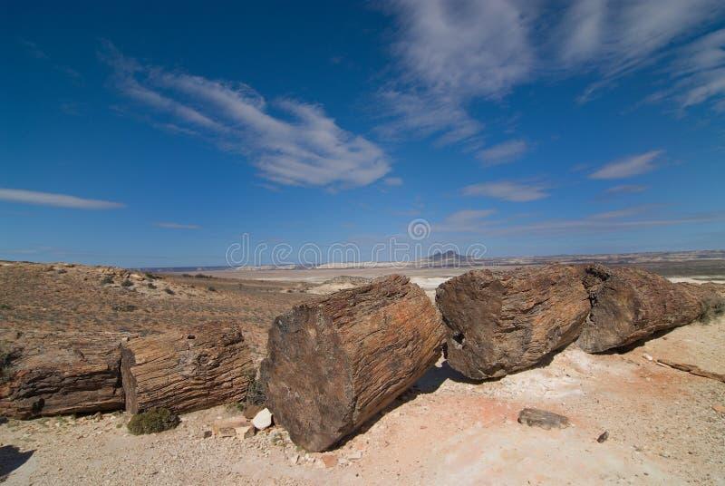 Legno Petrified nel Patagonia immagine stock libera da diritti