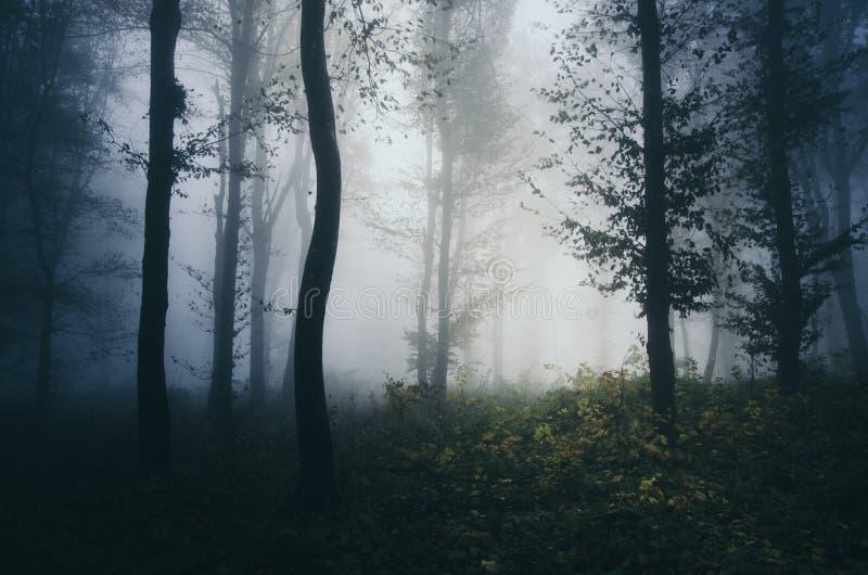 Legno scuro profondo con nebbia spessa fotografia stock