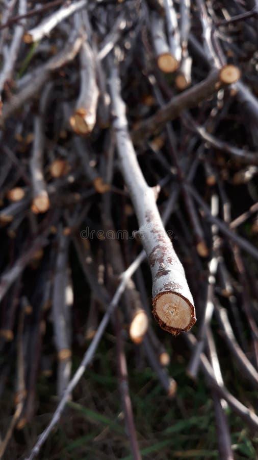 Legno sottile asciutto per riscaldare fotografie stock libere da diritti