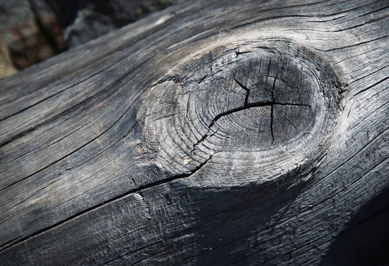 Legno stagionato grigio del dettaglio con il nodo fotografia stock libera da diritti