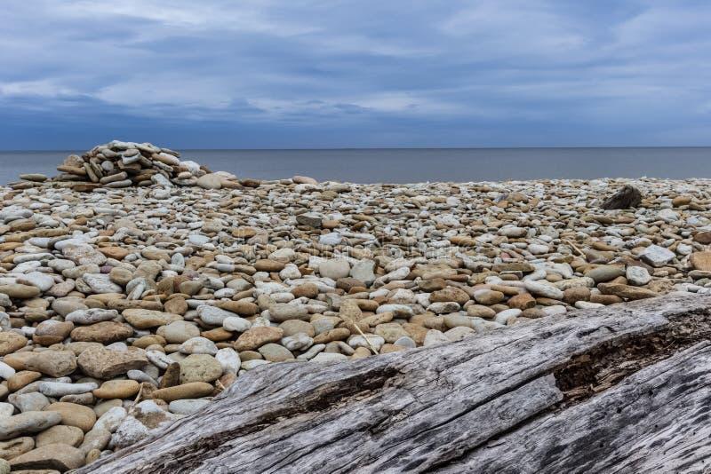 Legno su una spiaggia pietrosa immagini stock libere da diritti