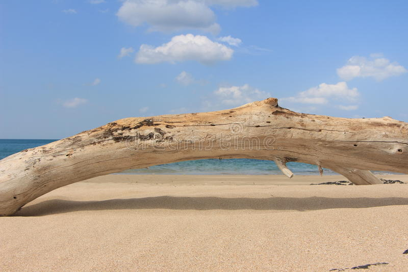 Legno sulla spiaggia fotografia stock