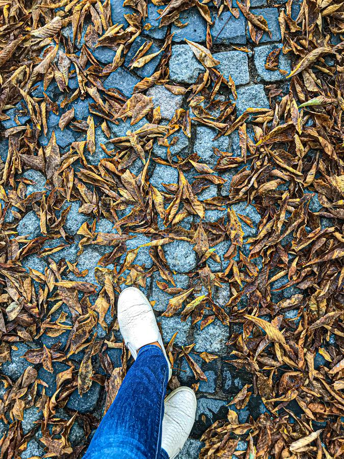 Shoes on the Paved walkway in Autumn Among the Fallen golden Leaves stock photos