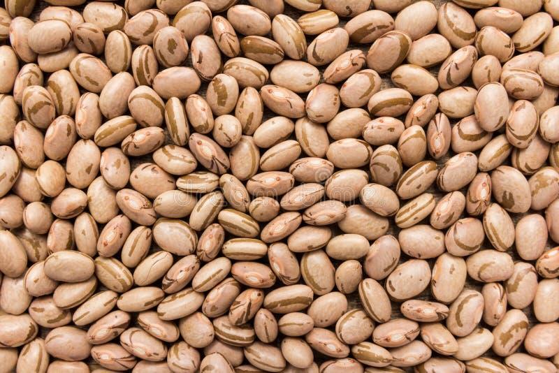 Legumbre de Pinto Bean Primer de granos, uso del fondo fotografía de archivo libre de regalías