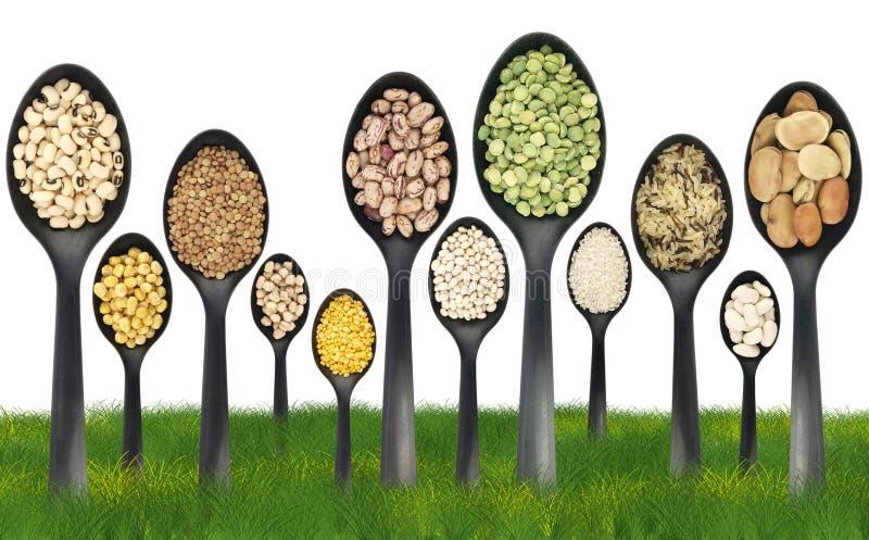 legumes травы поля стоковое изображение rf