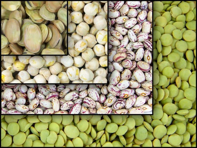 Download Legumes obraz stock. Obraz złożonej z szeroki, odżywczy - 13338275