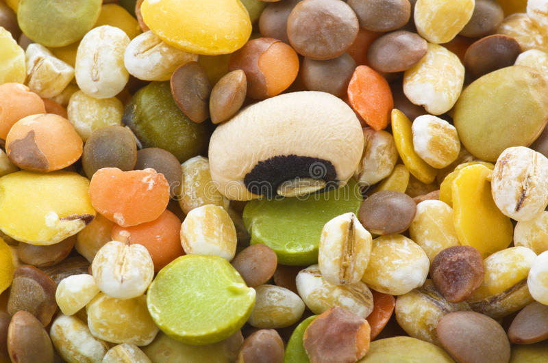 Legumes royalty free stock photos