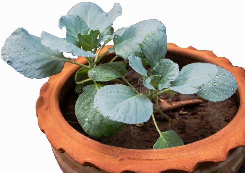 Legumes com folhas fotos de stock royalty free