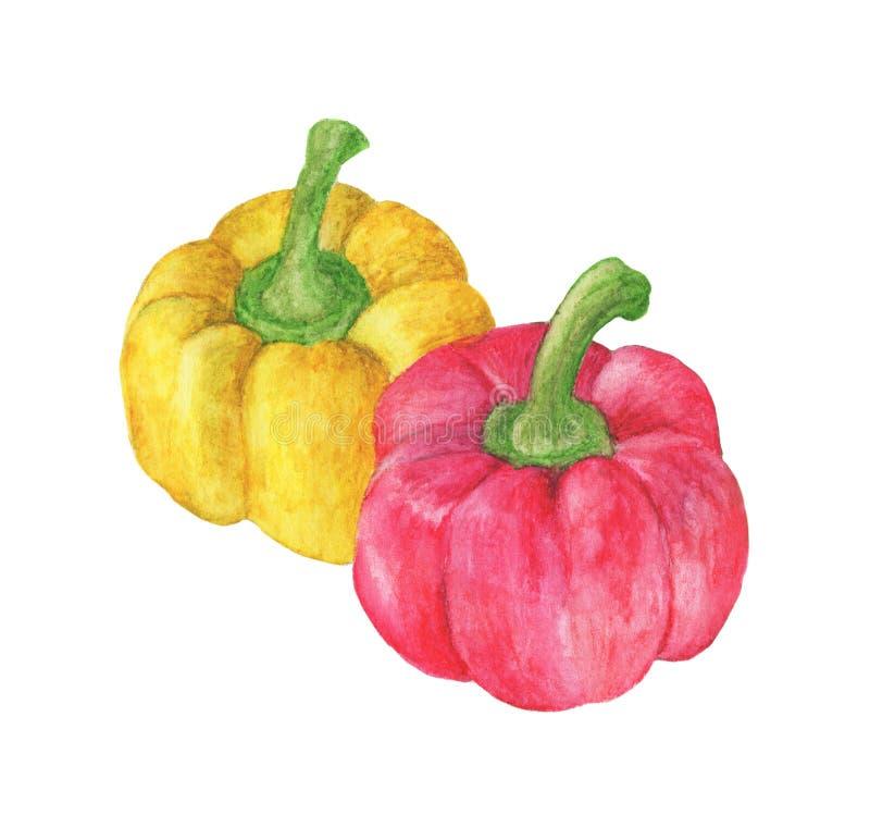 Legumes frescos duas pimentas vermelhas e amarelas doces ilustração royalty free