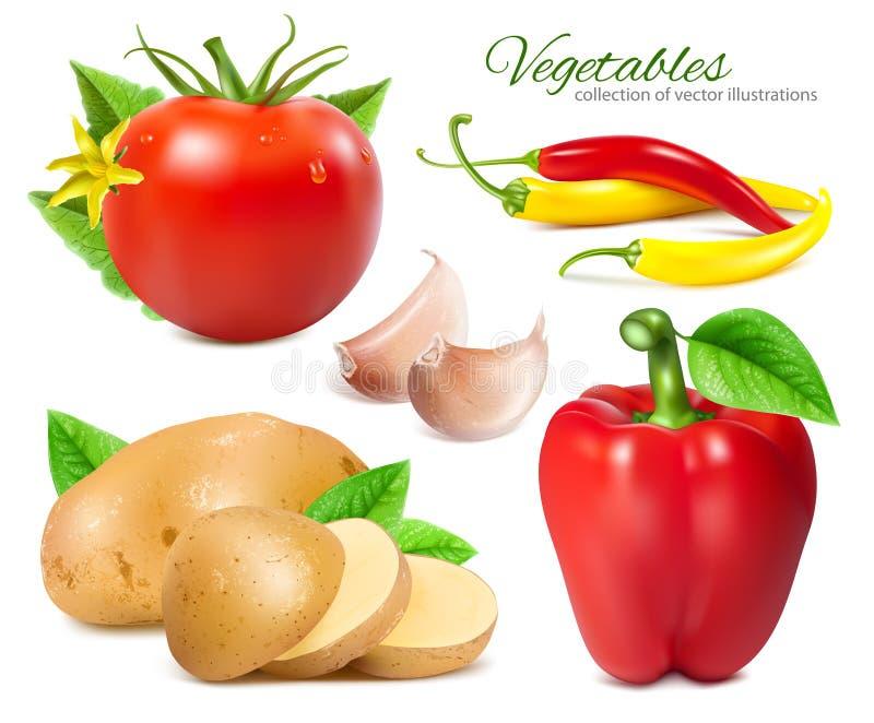 Legumes frescos maduros ilustração stock