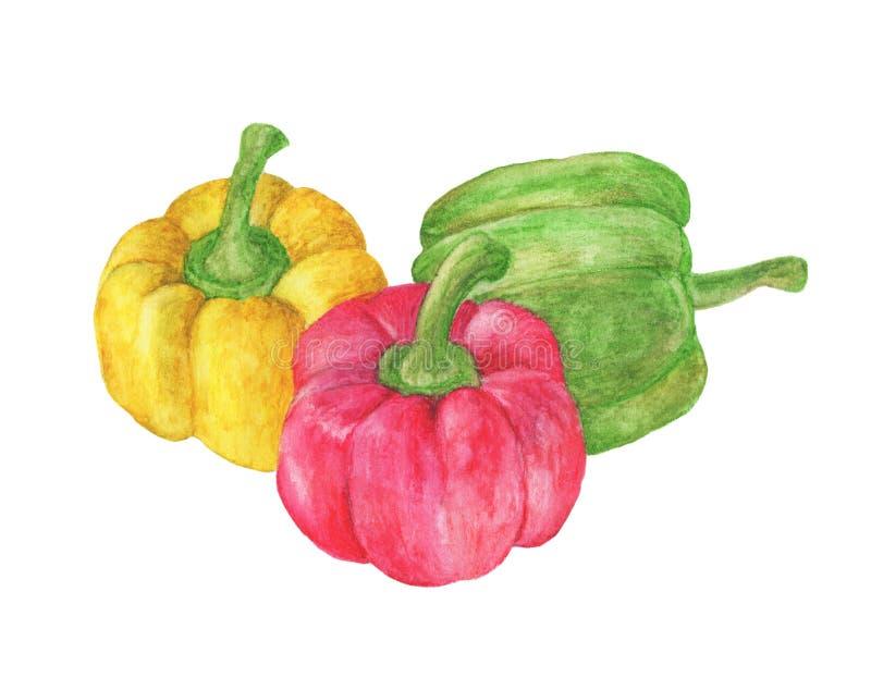 Legumes frescos três pimentas vermelhas, amarelas, verdes doces ilustração royalty free