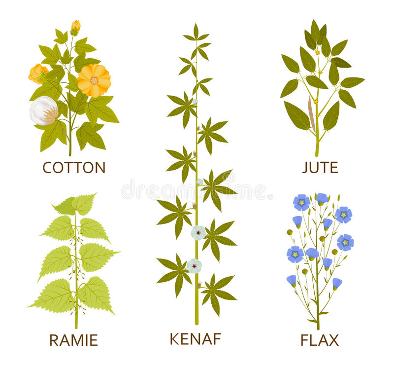 Legumes plants with leaves, pods and flowers royalty free illustration