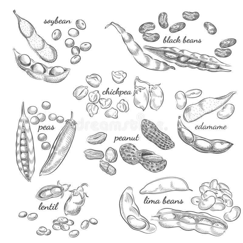 Legumes wręczają patroszoną ilustrację ilustracja wektor