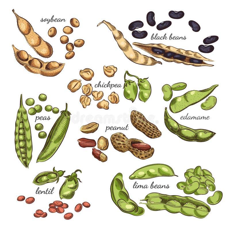 Legumes wręczają patroszoną ilustrację royalty ilustracja