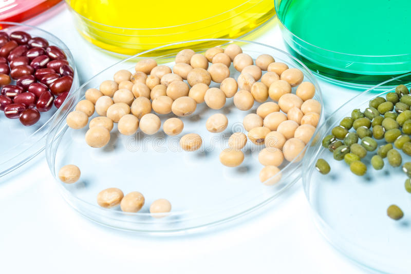 Leguminosa com o trigo alterado genetically, pilha da planta imagem de stock royalty free