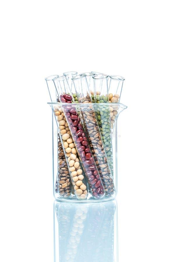 Leguminosa com o trigo alterado genetically, pilha da planta imagem de stock