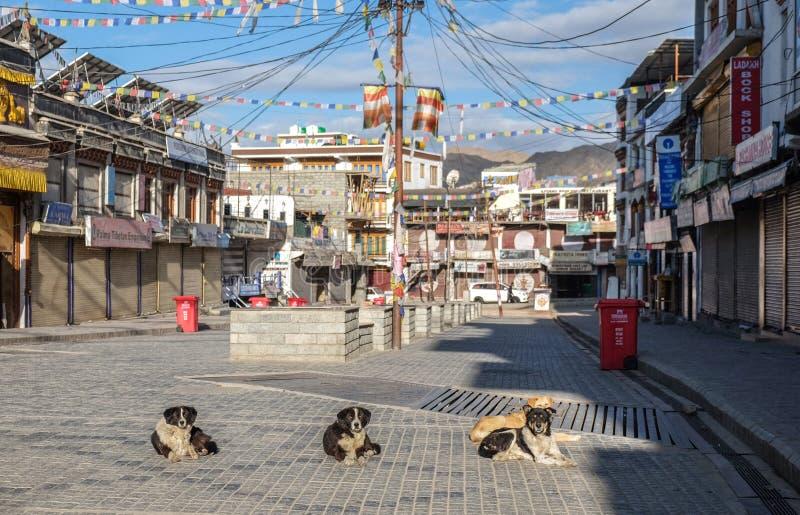 Leh Indien - April 28, 2017: Hundkapplöpning som lägger i solen på den Leh staden arkivfoto