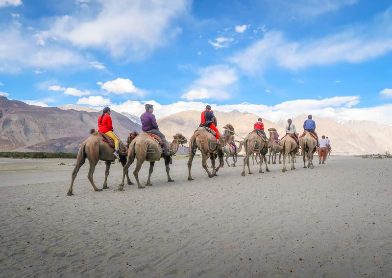 LEH LADAKH, INDIA-JUNE 24: Group of tourists are riding camels a royalty free stock photography