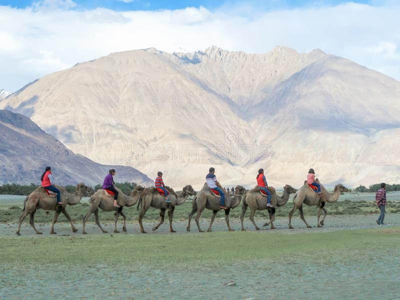 LEH LADAKH, INDIA-JUNE 24: Gruppen av turister rider kamel a arkivfoton