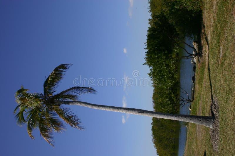 Lehnende Palme Stockbild