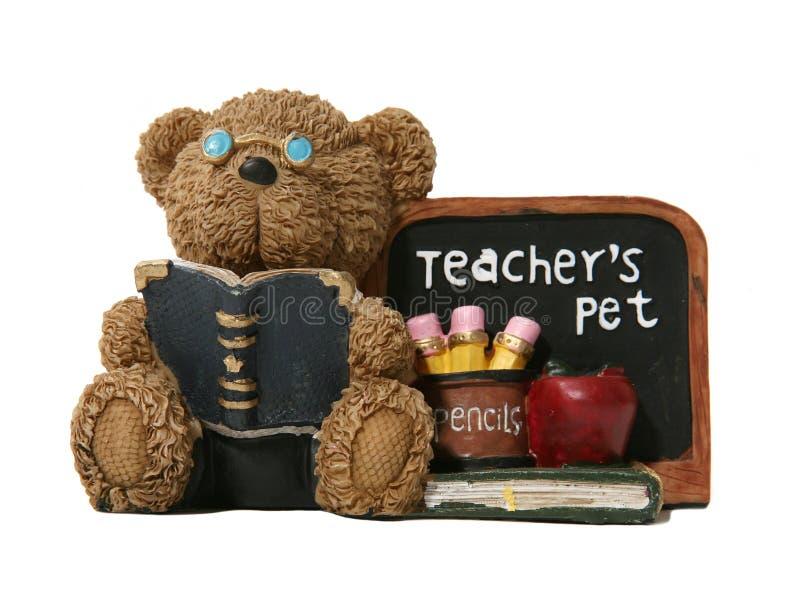 Lehrer-Bär lizenzfreies stockbild