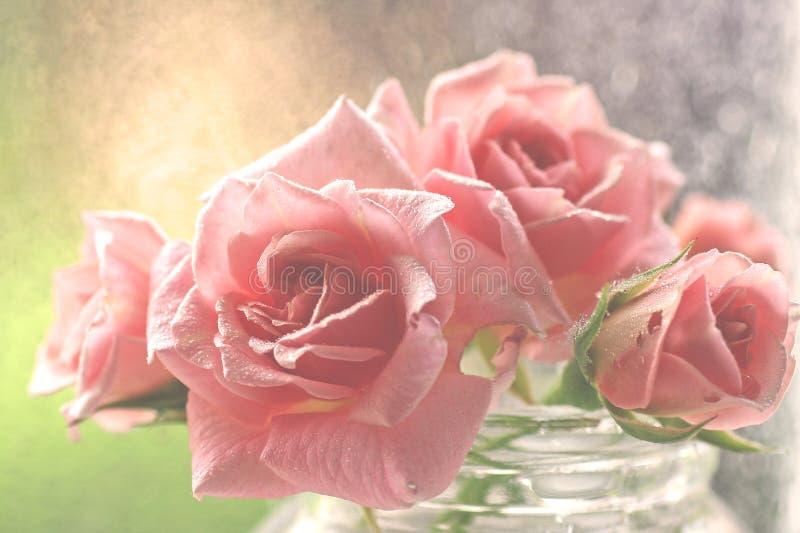 Leichte aquarel Rosarosen stockfoto