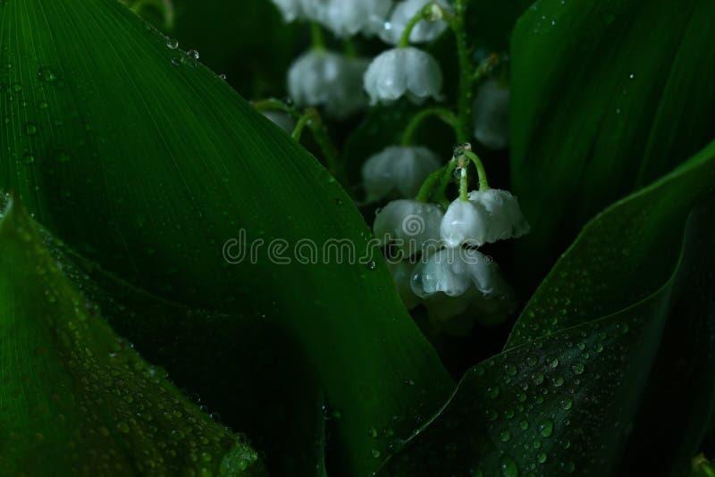 Leichte weiße Blumen stockfotos