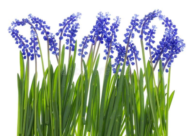 Leichtes Ostern-Gras und blaue Blumen lizenzfreies stockfoto