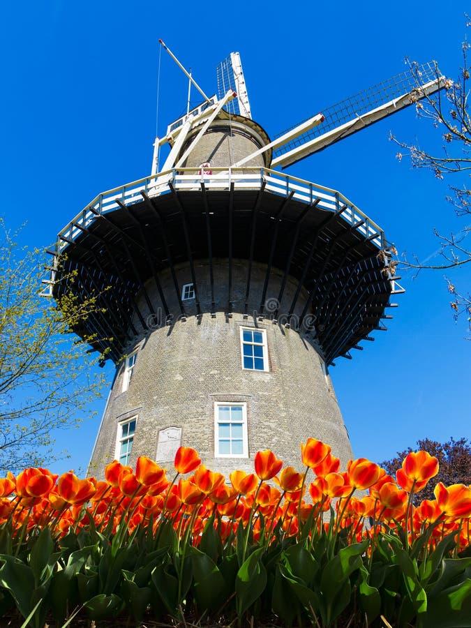 Leiden väderkvarn royaltyfri fotografi