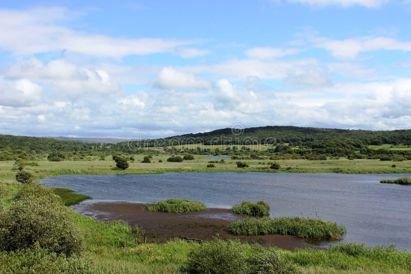 Leighton mech R S P B rezerwat przyrody, Silverdale zdjęcia stock