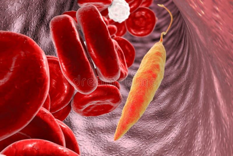Leishmania parasit i blod vektor illustrationer