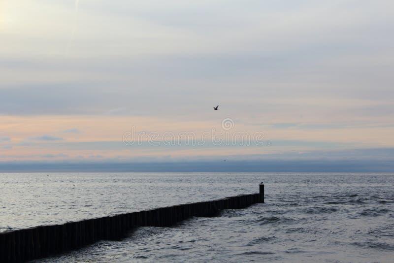 Leiste an am Ostseestrand von ustronie morskie, Polen in der Abenddämmerung lizenzfreie stockbilder