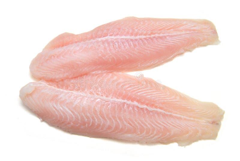 Leiste von Fischen Pangasius lizenzfreies stockbild