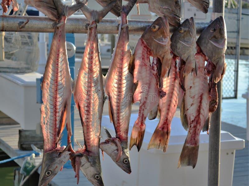 Leistenfischhängen umgedreht lizenzfreie stockfotos