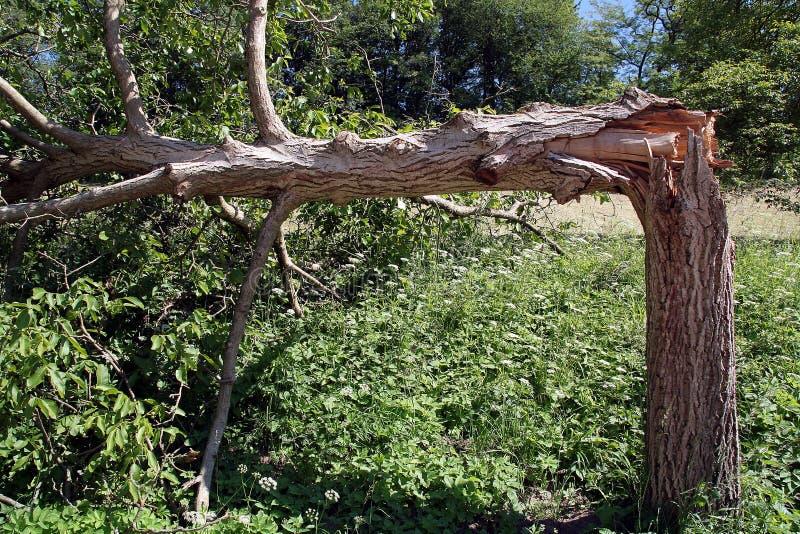 Download Leistung der Natur stockbild. Bild von büsche, wald, sommer - 867237