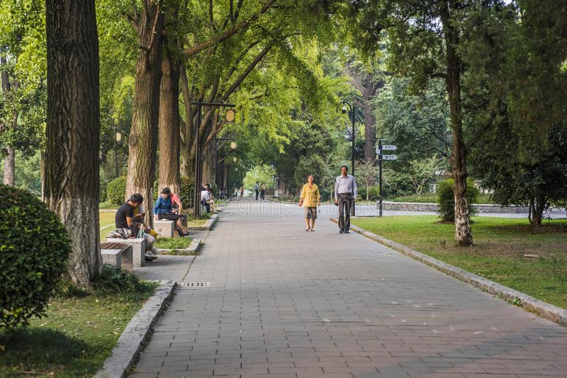 Leisure road hidden by green trees royalty free stock photos