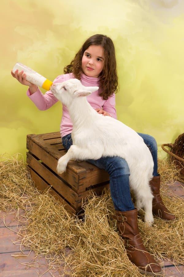 Leite de alimentação a uma cabra pequena com fome do bebê imagens de stock royalty free