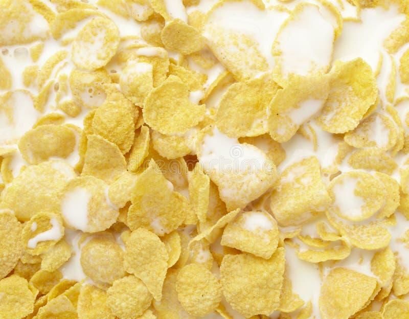 Leite do alimento do muesli dos cereais dos flocos de milho foto de stock