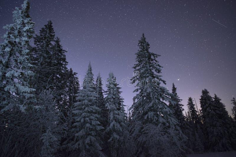 Leiteria Star Trek nas madeiras do inverno imagem de stock
